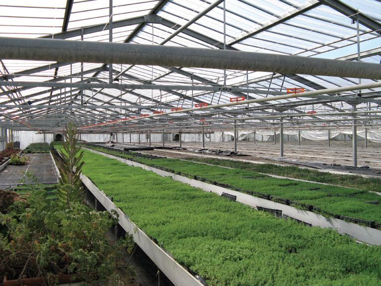 Polylglass Plastics Commercial Greenhouse