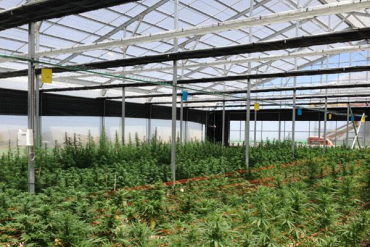 polylgass plastics cannabis growing greenhouse material
